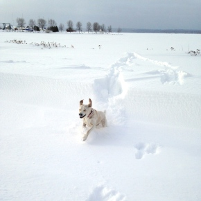 Dogs, books, travel and food – some 2013highlights