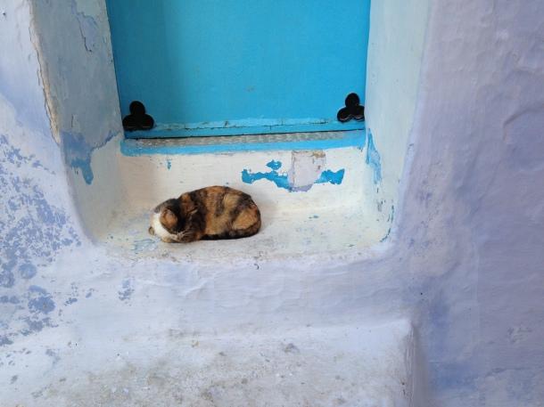 Chauoen cat